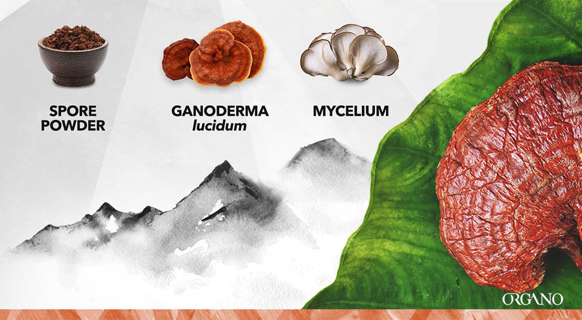ORGANO Ganoderma: what sets our products apart